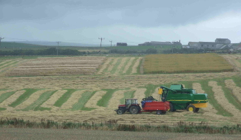 Harvesting Bere, with RESAS trials in the background