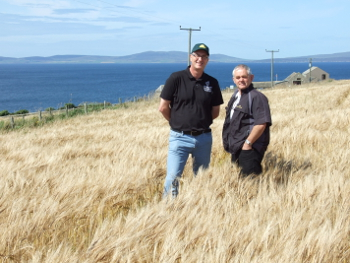 A field of Tartan barley being grown in Orkney for Highland Park distillery
